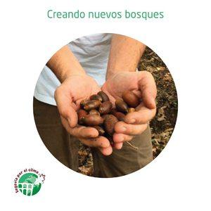 """🌱Queremos fomentar la plantación de árboles en nuestra provincia y colaborar con la Asociación Segovia por el Clima, @sgxelclima en sus """"bellotadas"""". 🌳Hasta la fecha han sembrado más de 31.000 bellotas y plantado más de 3.000 árboles en diferentes municipios de Segovia. http://mtr.cool/fbqexyhgra   😳Estate atento, te contamos qué vamos a hacer en Amapola para colaborar con ellos, tú también puedes formar parte. 😀   #segoviaporelclima #amapolabio #cosmeticaecologica #cosmeticantural #cuidalosbosques #plantaarboles #reciclareducereutiliza #plantasquecuran"""