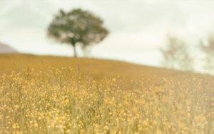 Calendula - Amapola Biocosmetics - Cosmética Natural